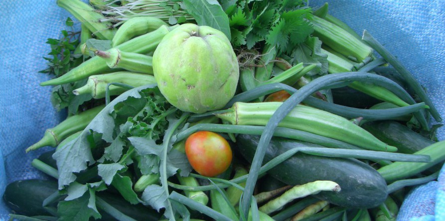 Täglich gibt es Gemüse aus eigenem Garten